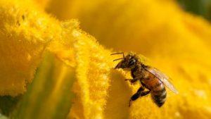 Nature crisis: Humans 'threaten 1m species with extinction'