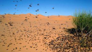 Jordan sends out air force to defeat locust swarm