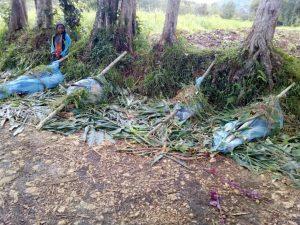 Gunmen massacre 18, including children, in Papua New Guinea attack